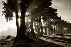 Light and shade trees print