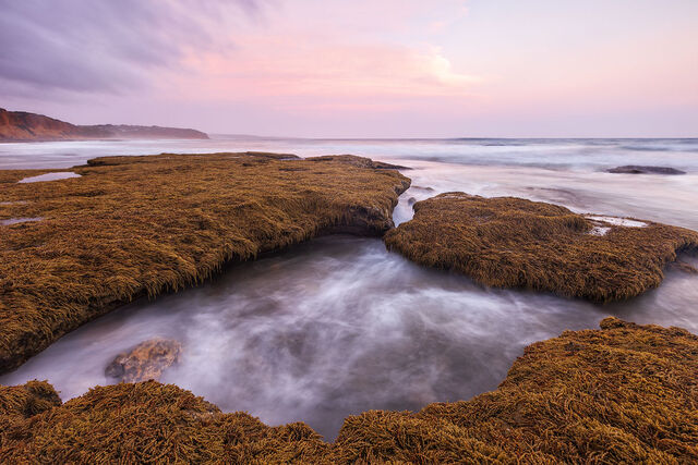 Aireys Inlet 36