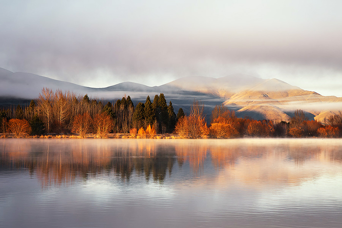 mist and flame trees, morning mist, late autumn, twizel, new zealand