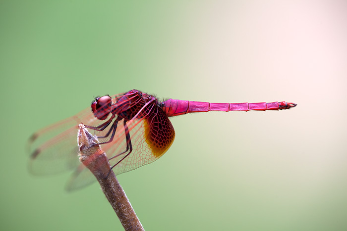 Dragon fly captured in Guilin, China.
