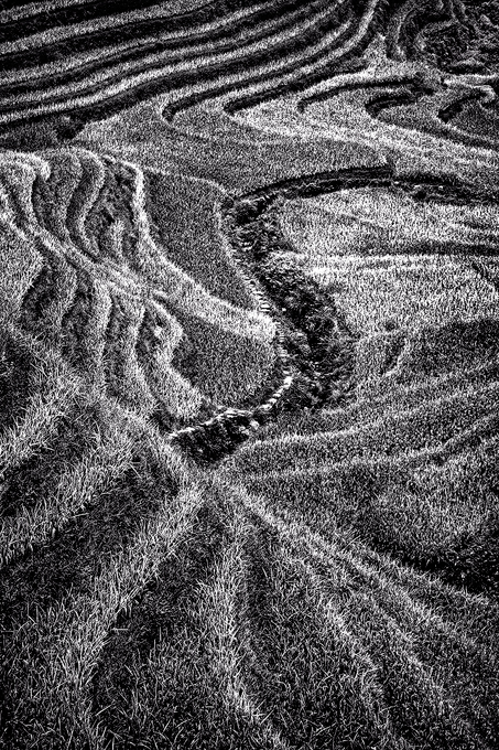 Rice fields in monochrome, Guilin, China