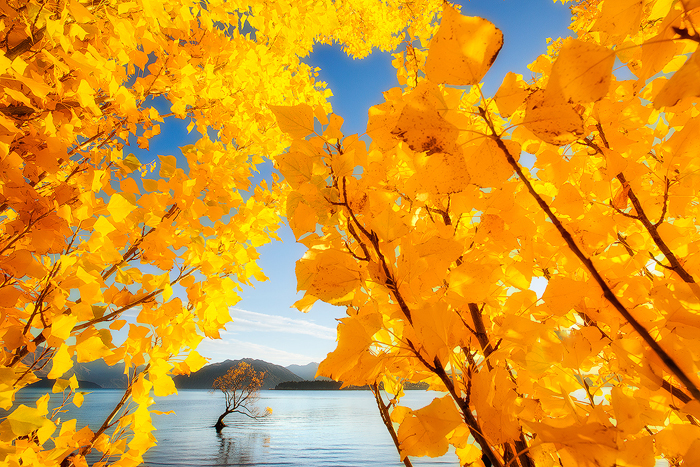 Golden leaves with a golden view.