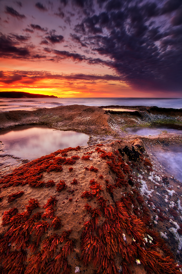 Colourful algae makes for an interesting foreground, leading into a wonderful sunrise at Red Johanna Beach. Photo © Darren J...